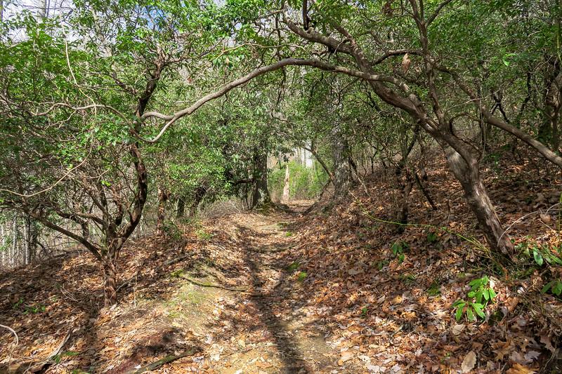 Avery Creek Trail -- 3,350'