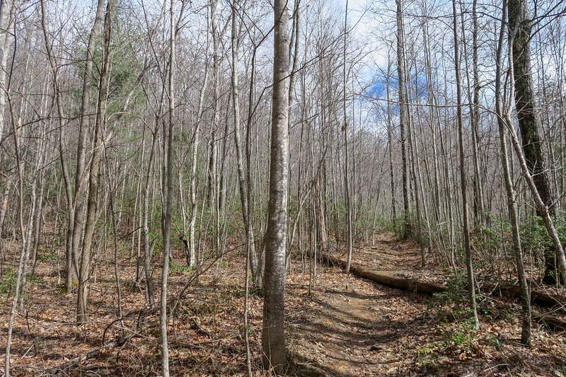 Avery Creek Trail -- 3,300'