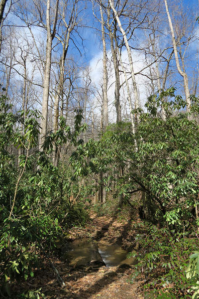 Avery Creek Trail -- 2,800'