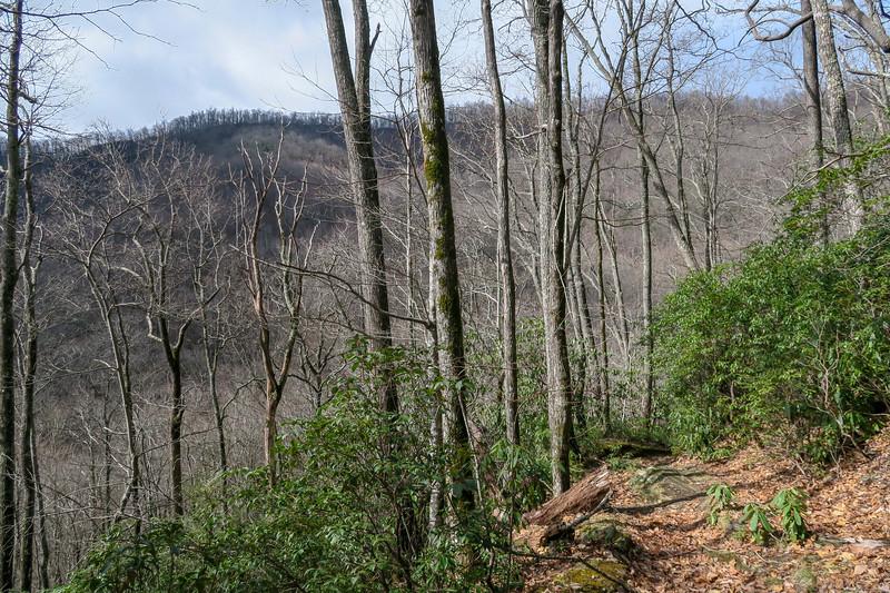 Avery Creek Trail -- 3,100'