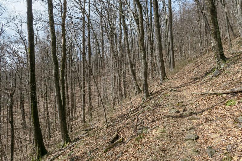 Avery Creek Trail -- 3,440'