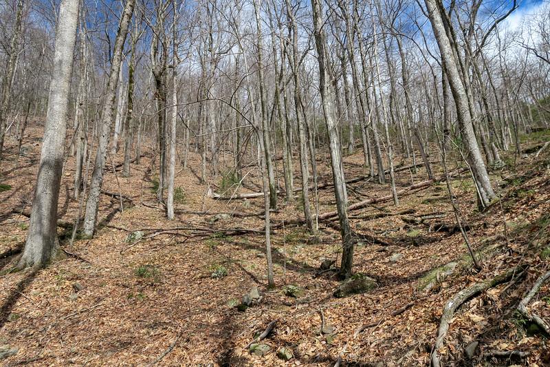 Avery Creek Trail -- 3,400'