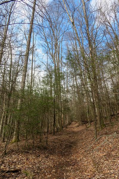 Avery Creek Trail -- 2,850'