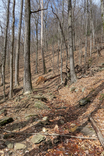 Avery Creek Trail -- 3,520'