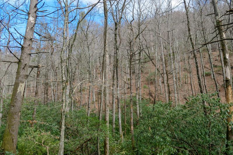 Avery Creek Trail -- 2,630'