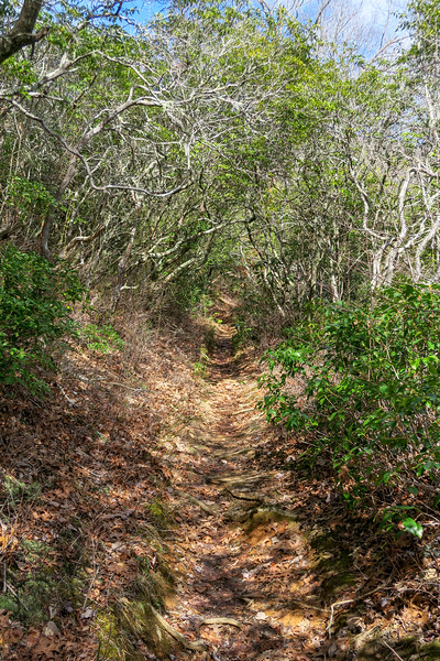 Avery Creek Trail -- 3,180'