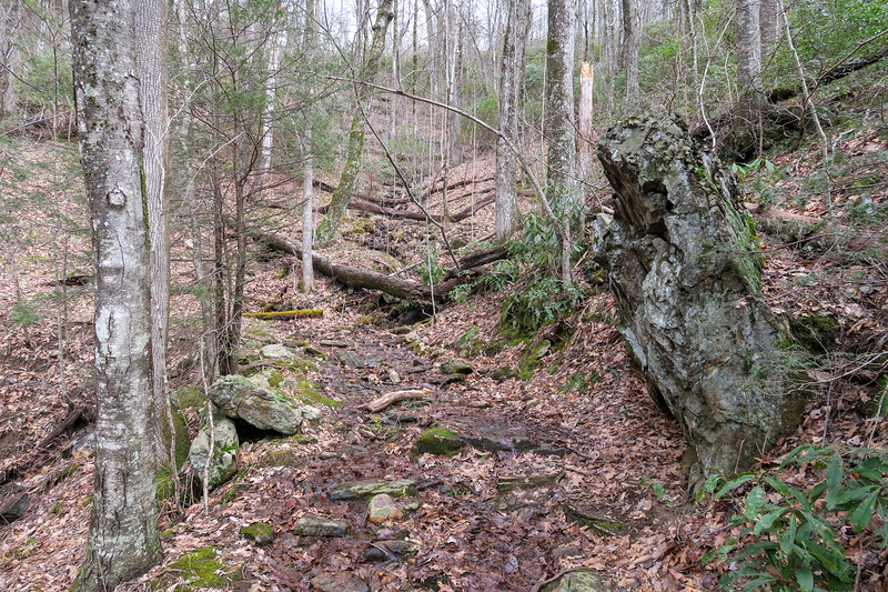 Avery Creek Trail -- 3,600'