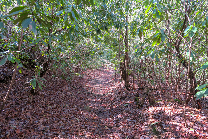 Buckhorn Gap Trail -- 2,580'