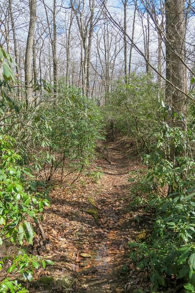 Avery Creek Trail -- 3,220'