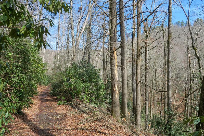 Buckhorn Gap Trail -- 2,560'