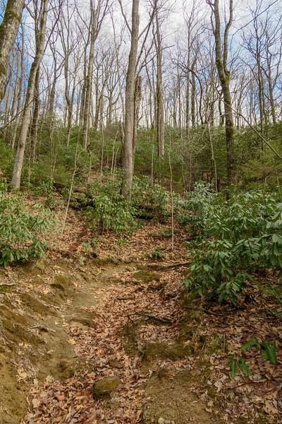 Avery Creek Trail -- 3,040'