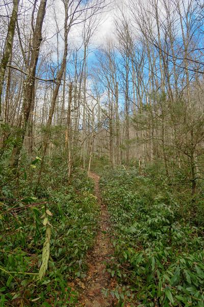 Avery Creek Trail -- 2,620'