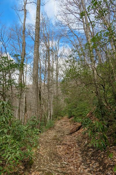 Avery Creek Trail -- 3,000'