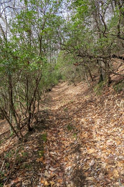 Avery Creek Trail -- 3,540'