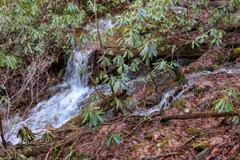 Pressley Cove Trail -- 3,050'