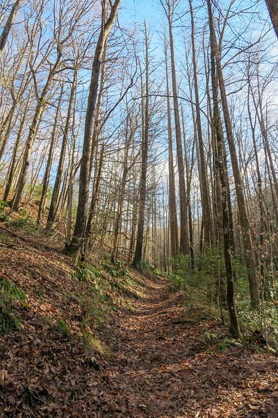 Pressley Cove Trail -- 2,700'