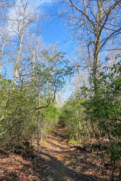 Black Mountain Trail -- 3,460'
