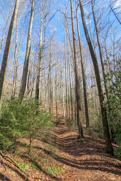Pressley Cove Trail -- 2,800'