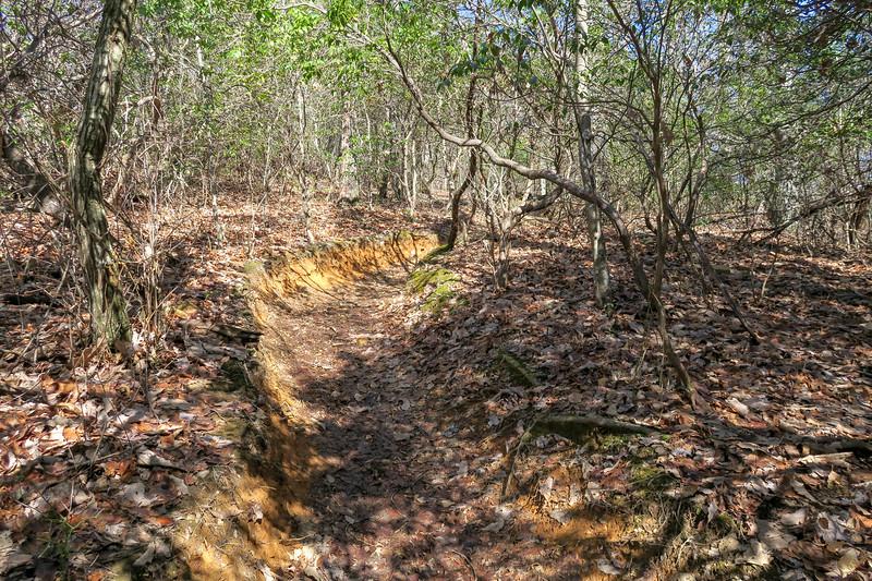 Black Mountain Trail -- 3,550'