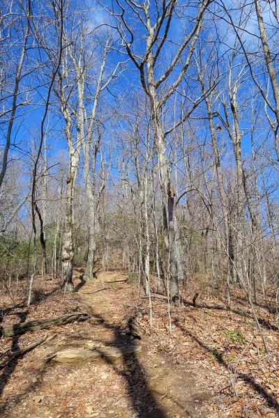 Black Mountain Trail -- 3,620'