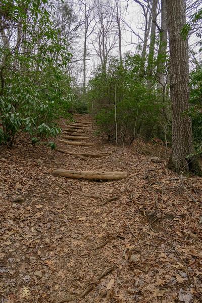 Bad Fork Trail -- 2,900'
