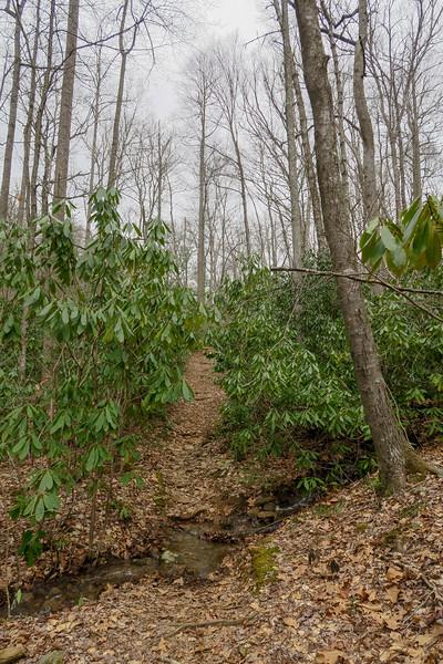 Bad Fork Trail -- 2,680'