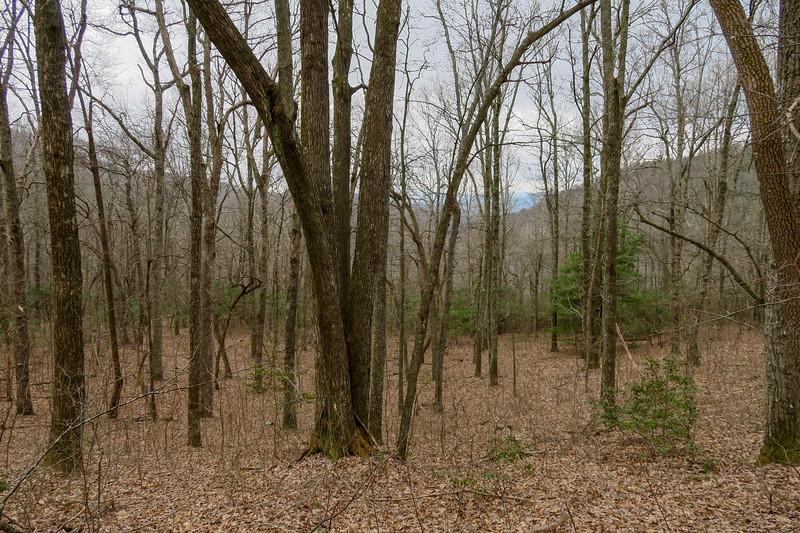 Bad Fork Trail -- 3,180'