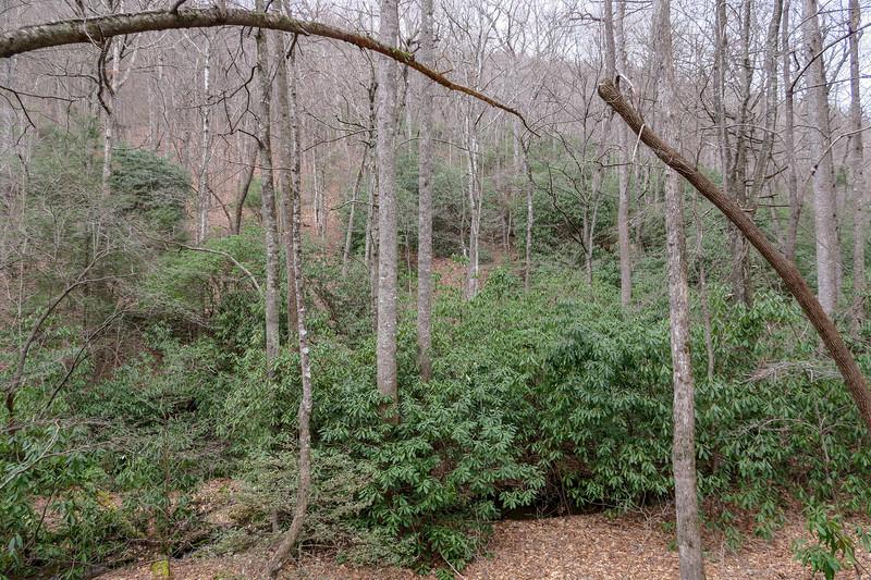 Bad Fork Trail -- 2,720'