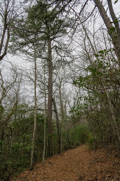 Bad Fork Trail -- 3,250'