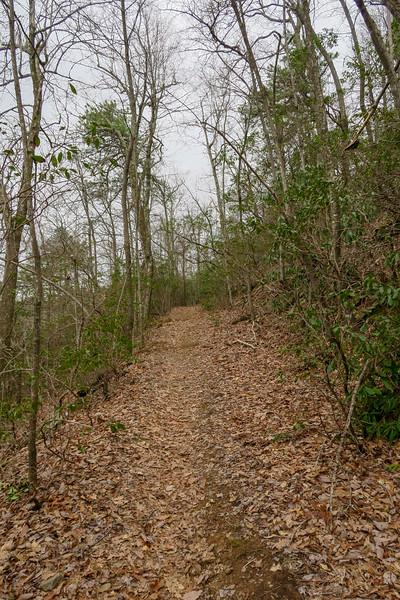 Bad Fork Trail -- 3,200'