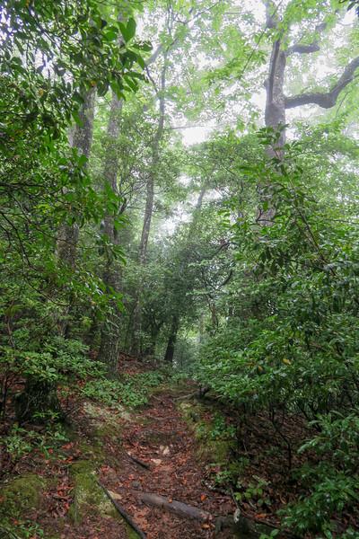 Barnett Branch Trail -- 3,730'
