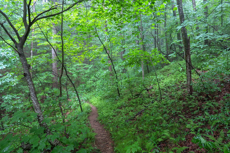 Buck Spring Trail -- 3,720'
