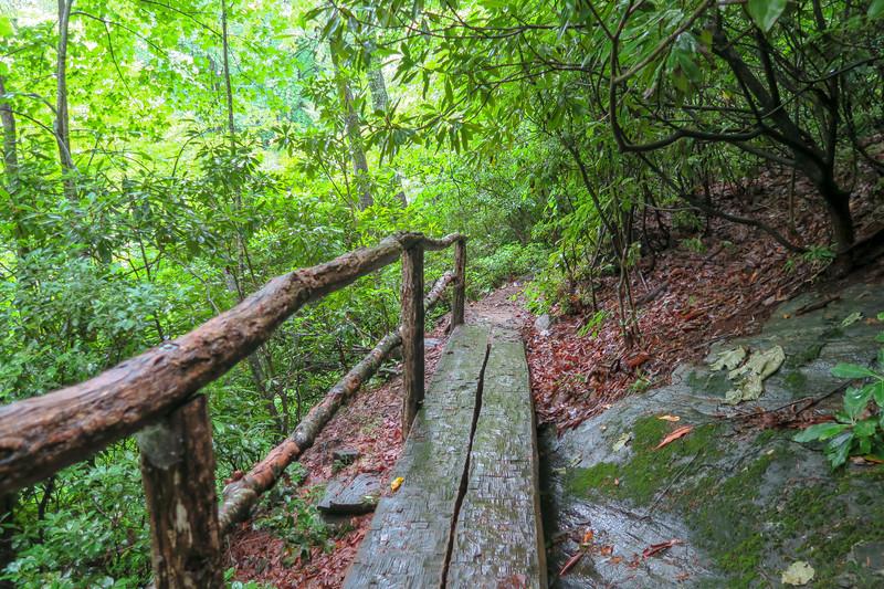 Barnett Branch Trail -- 3,540'