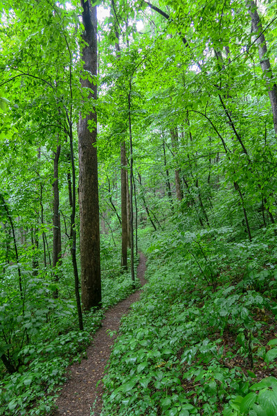 Buck Spring Trail -- 3,640'