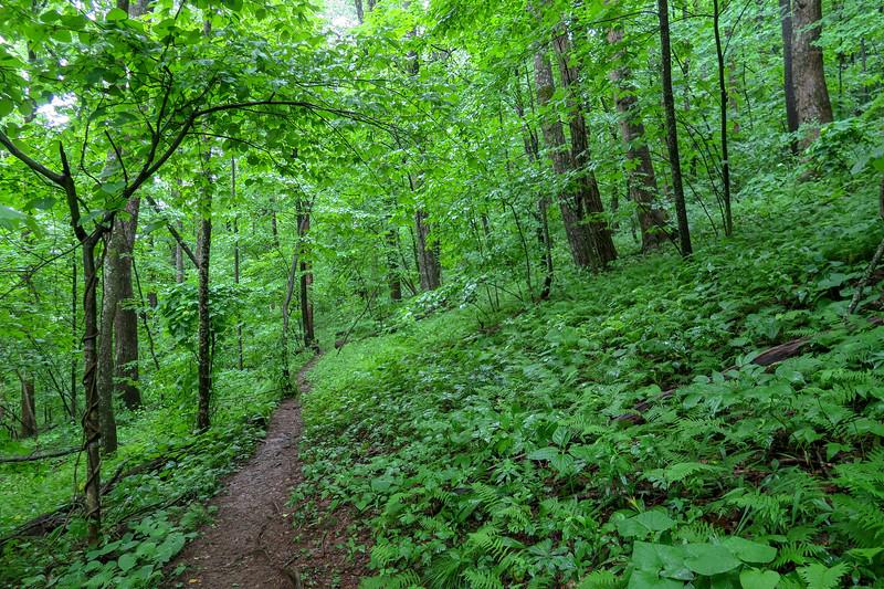 Buck Spring Trail -- 3,660'