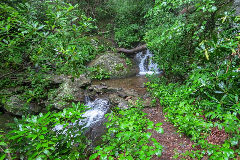 Buck Spring Trail @ Unnamed Tributary of Barnett Branch-- 3,710'