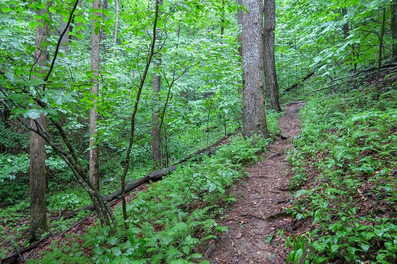 Barnett Branch Trail -- 3,600'