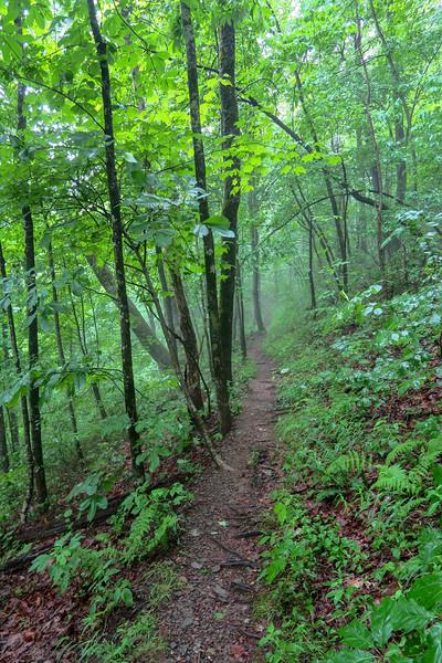 Buck Spring Trail -- 3,750'