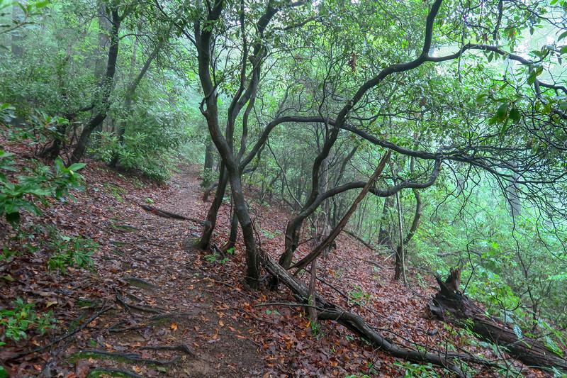 Barnett Branch Trail -- 3,760'