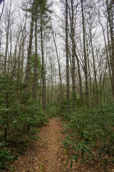 Bear Branch Trail -- 2,580'
