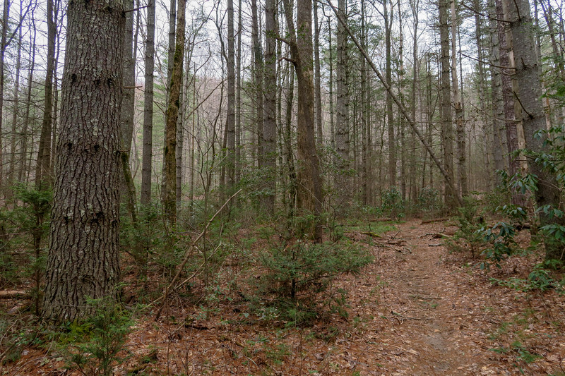 Bear Branch Trail -- 2,570'