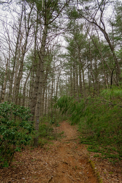 Bear Branch Trail -- 2,630'