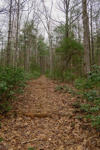 Bear Branch Trail -- 2,680'