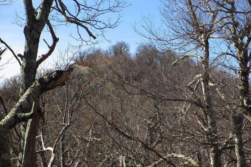 Pisgah Ridge Manway - 5,100'