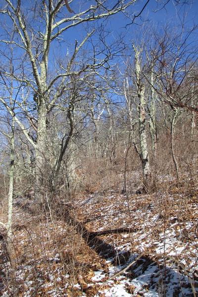 Pisgah Ridge Manway - 5,280'