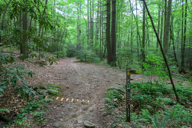 Forest Road 479G-Green's Lick-Sidehill Trail Junction -- 2,550'