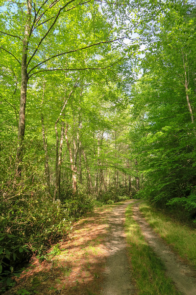 Forest Road 479G -- 2,250'