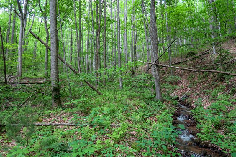 Sidehill Trail -- 2,600'