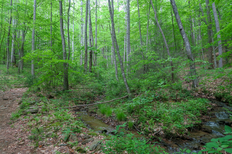 Sidehill Trail -- 2,580'