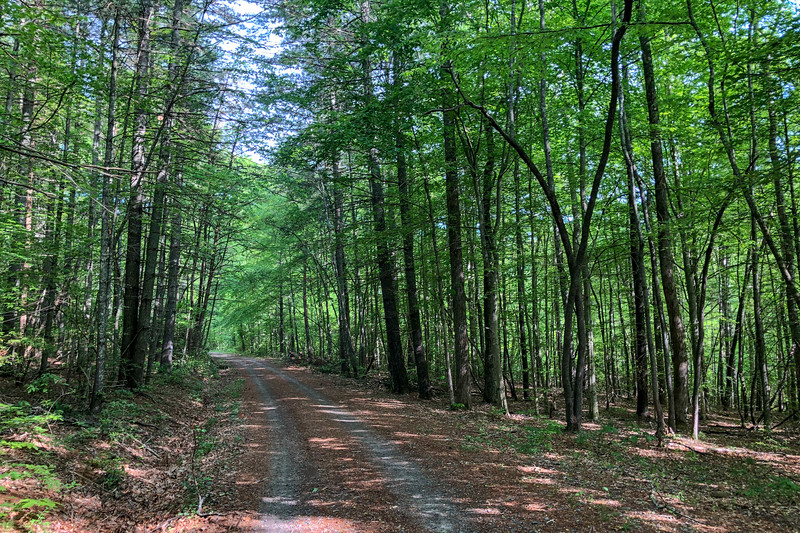 Forest Road 479F -- 2,320'